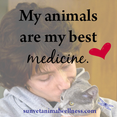 holistic-vet-animals-best-medicine