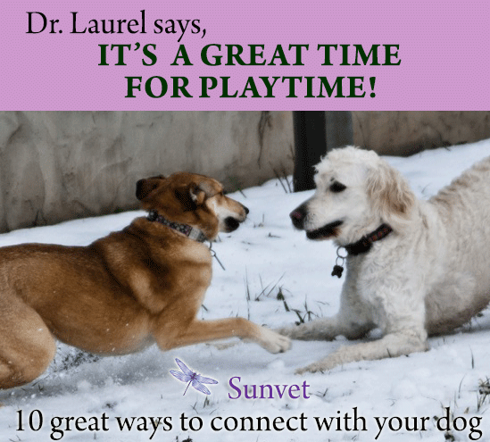 Sunvet Animal Wellness - a great time for playtime