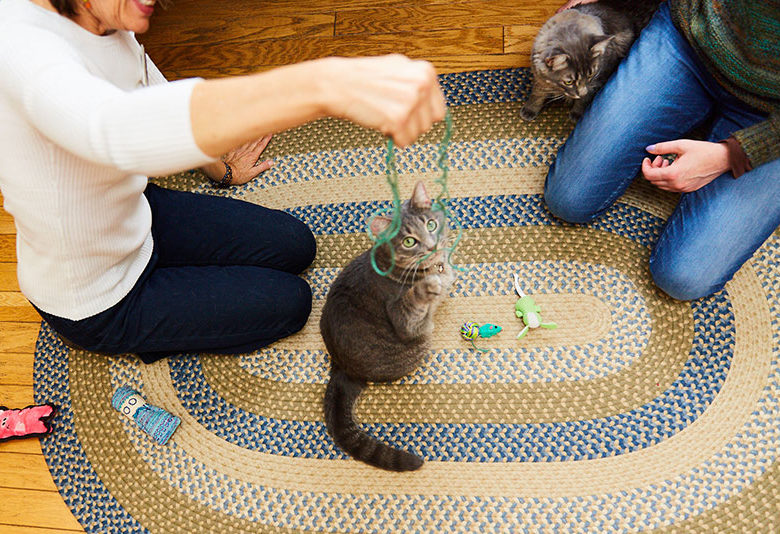 women play with cat on the floor
