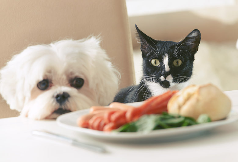 dog and cat look at plate of food