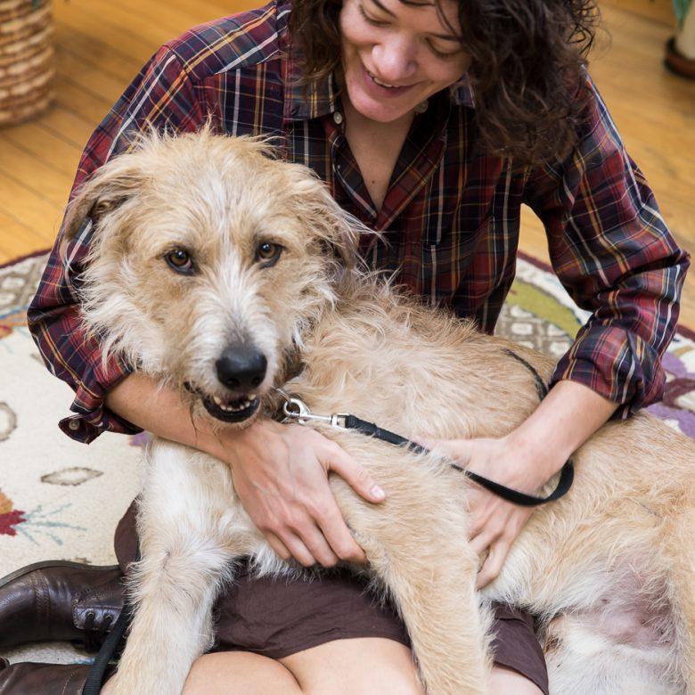 Asheville integrative vet