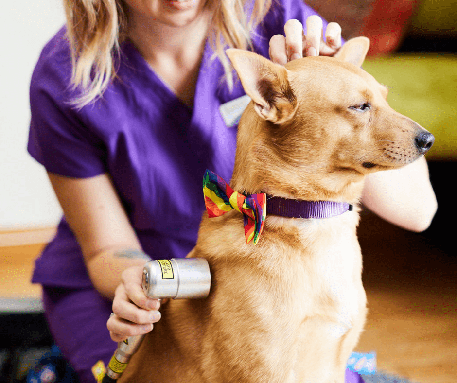 10% Off Cold Laser Therapy 1