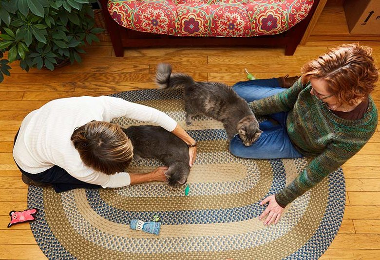 Dr. Laurel Davis and Sunvet client play with two cats