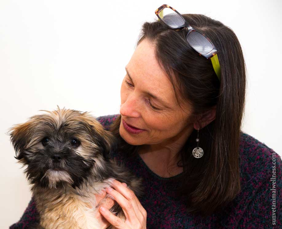 An Interview with Asheville's Holistic Vet: A Lesson in Listening 1
