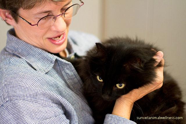 Asheville's holistic veterinarian