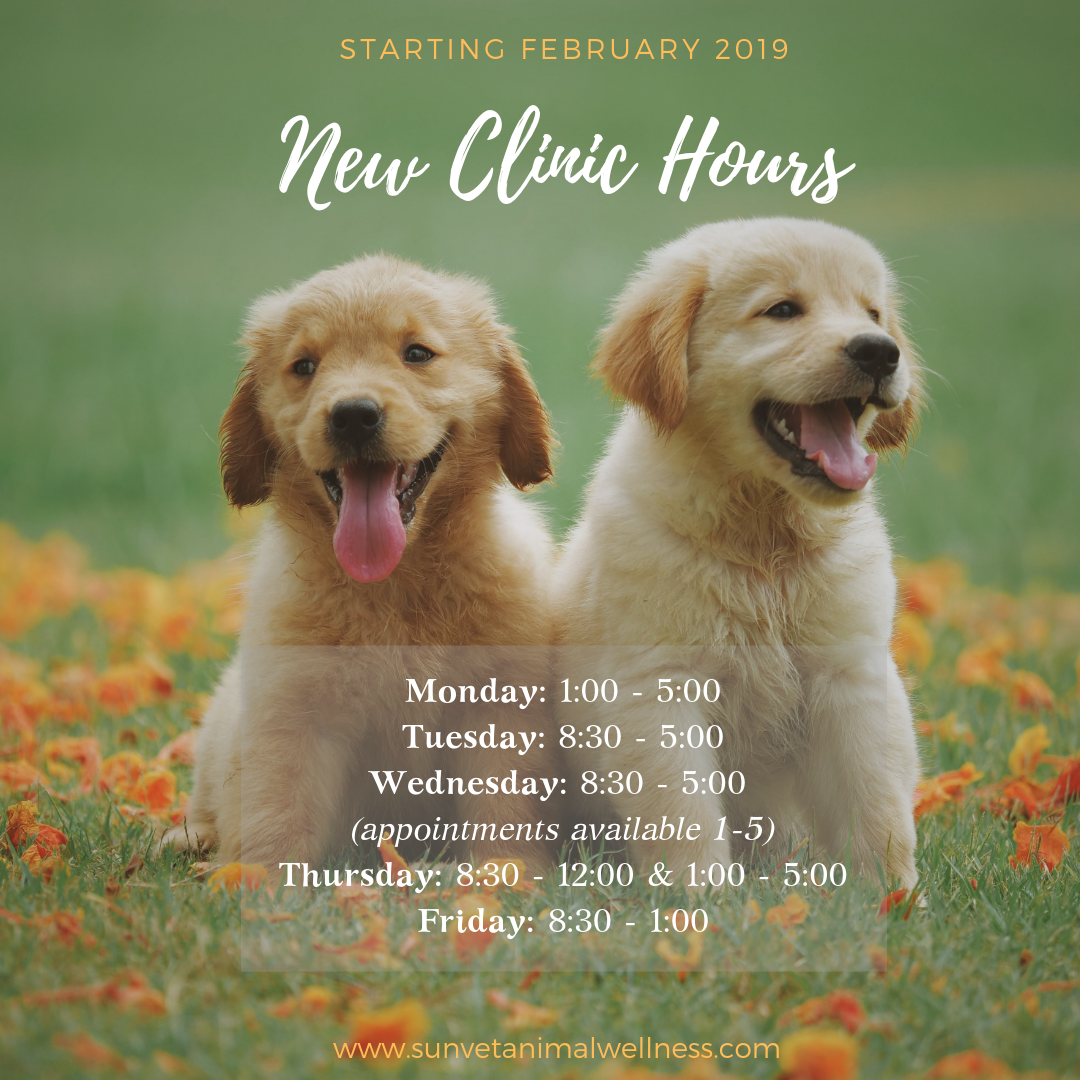 New Sunvet Clinic Hours