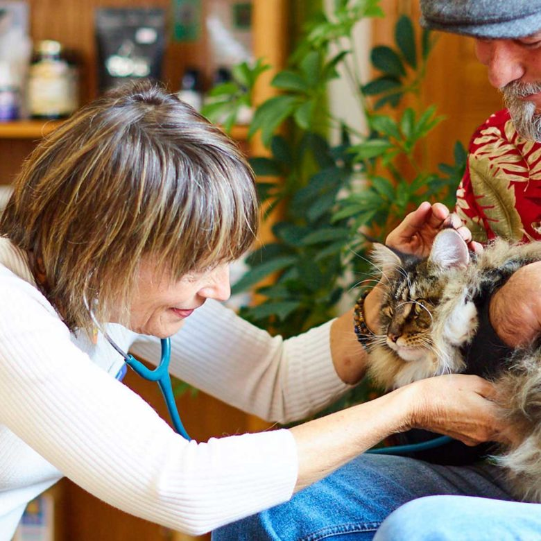 woman-veterinarian-examines-cat
