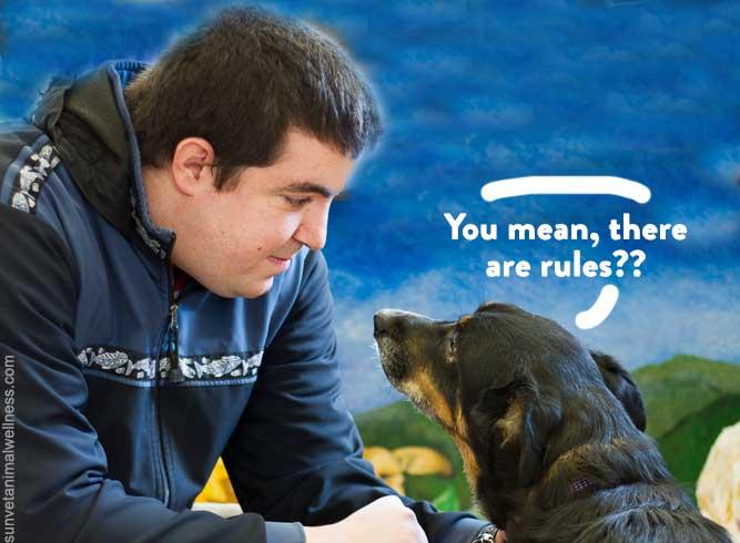 Western NC holistic veterinarian