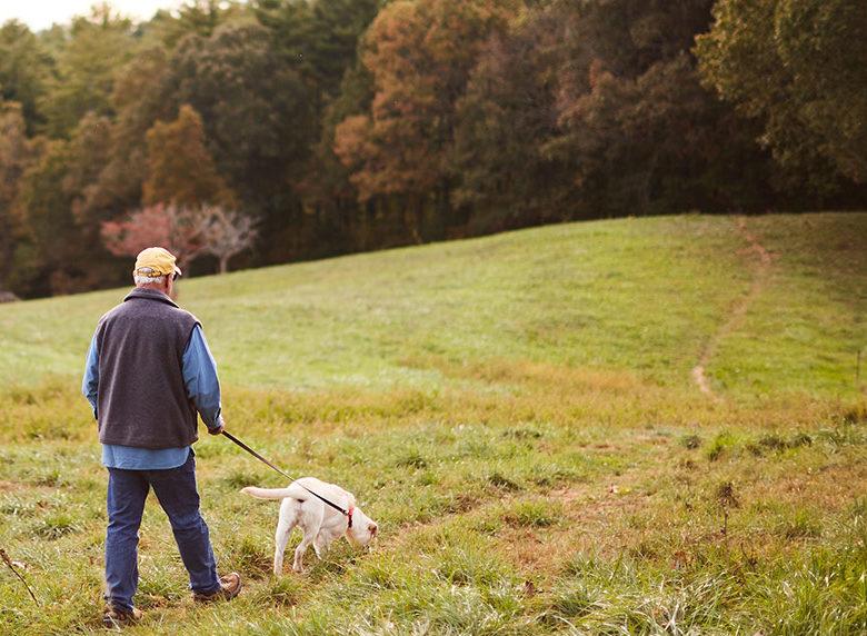Man walking white lab on grass