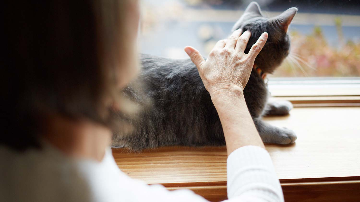 woman-touches-cat