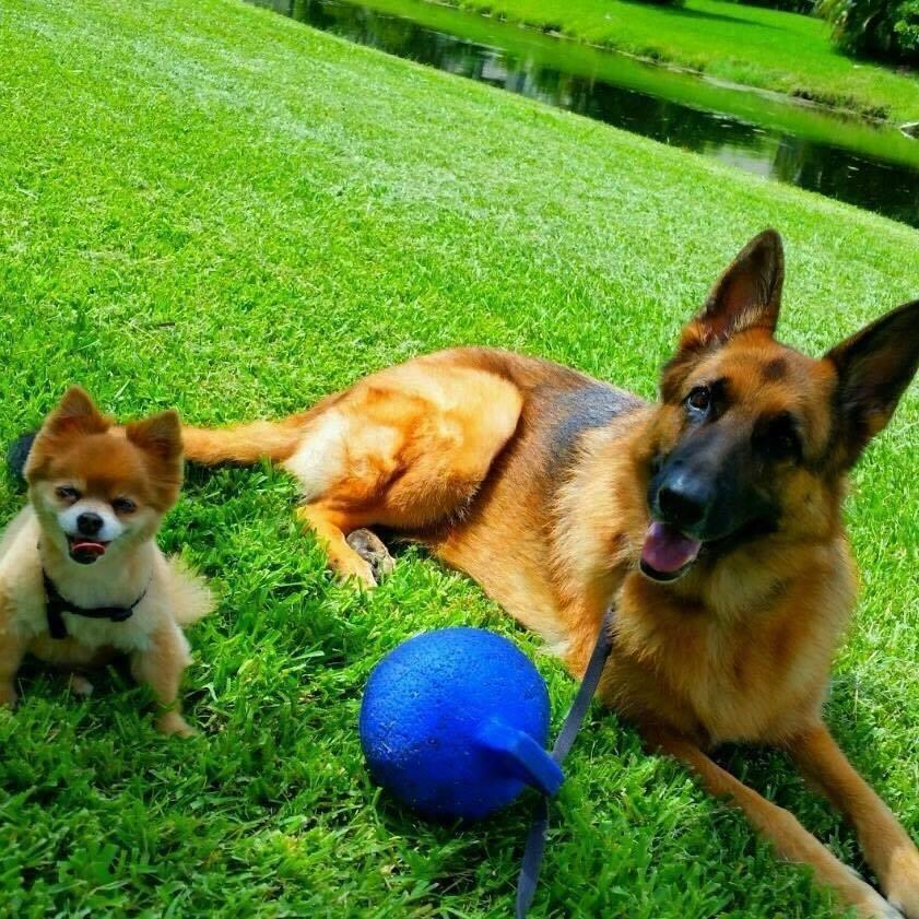 holistic veterinarian