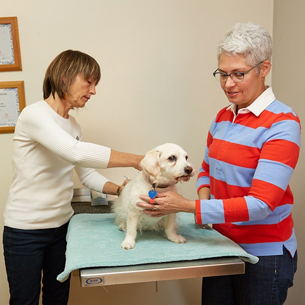 woman-veterinarian-holistic-treatment-on-senior-dog