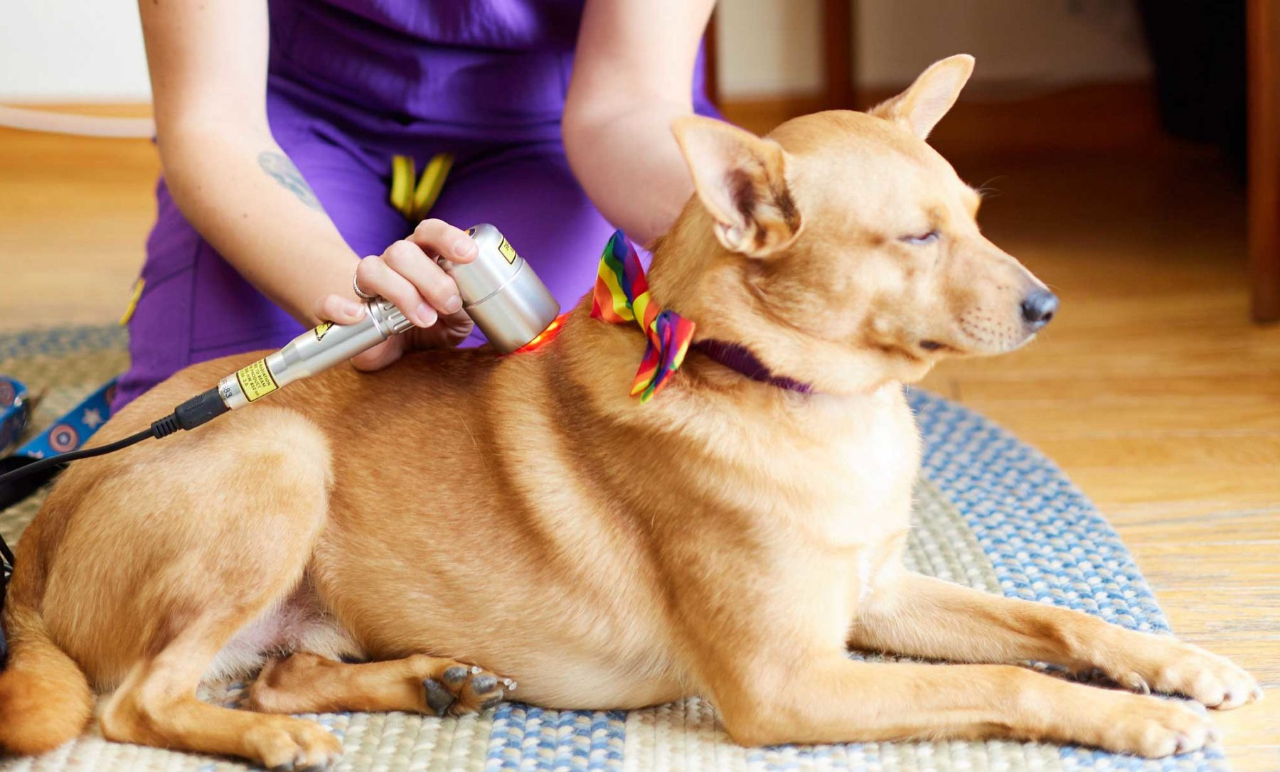 Cold Laser Therapy on Dog