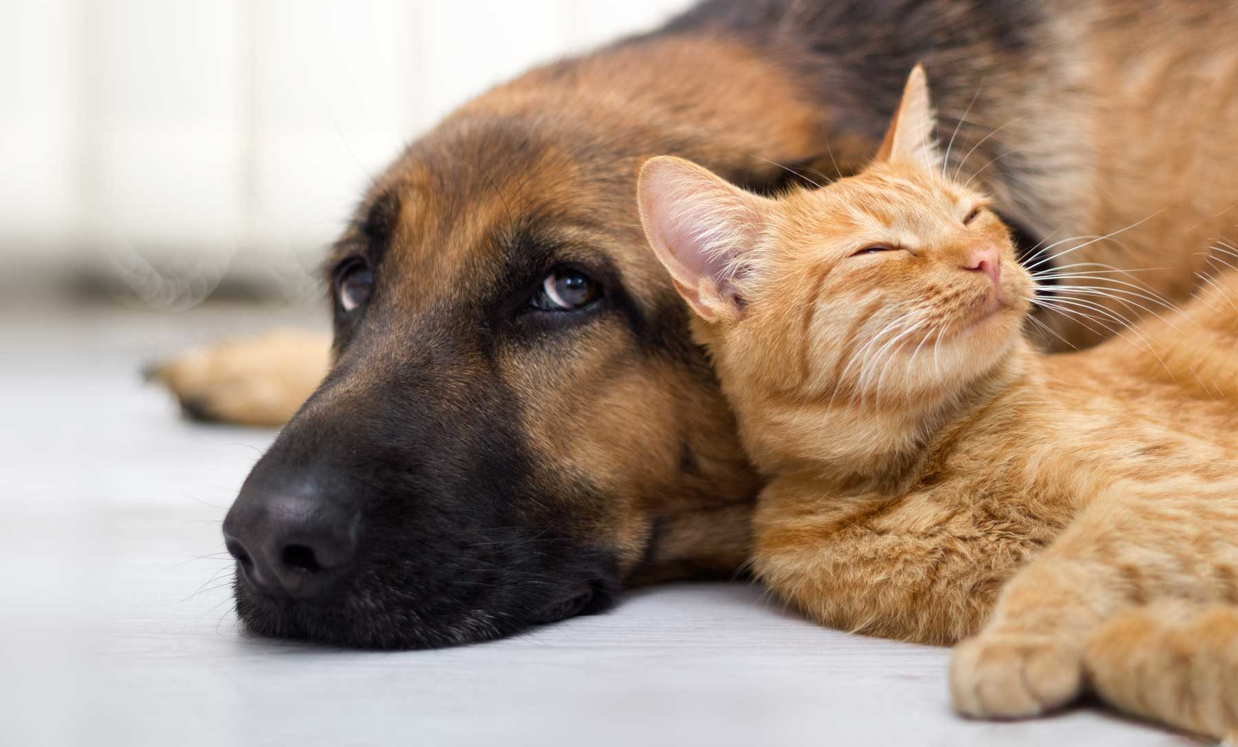 Custom Vaccines for Dog and Cat