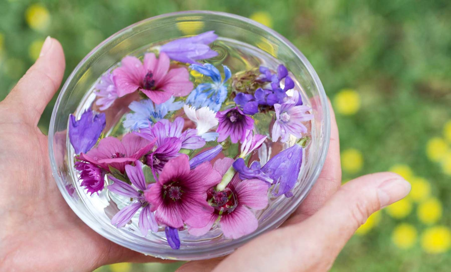 flower essences for cats and dogs