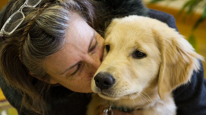 How Long Does It Take a Puppy Vaccine to Work? 1