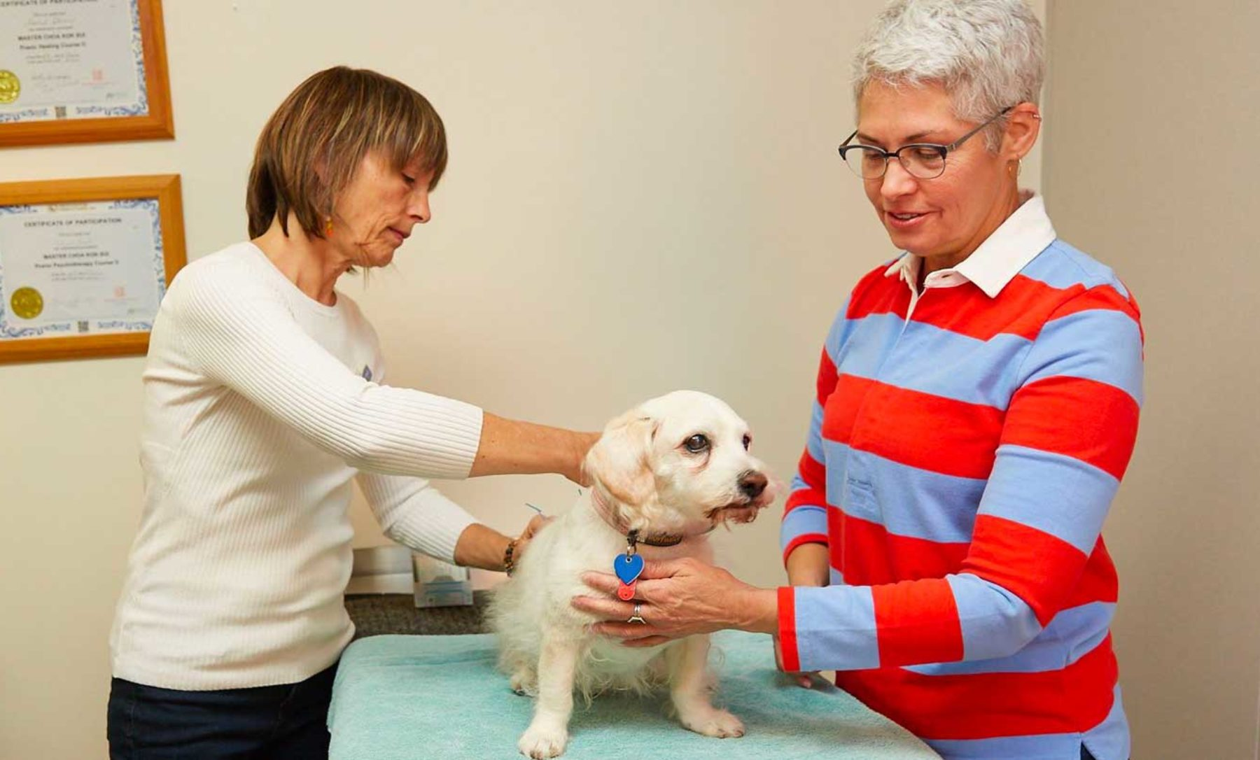 integrative treatment on dog