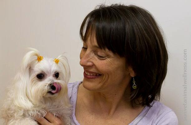 Asheville natural veterinarian