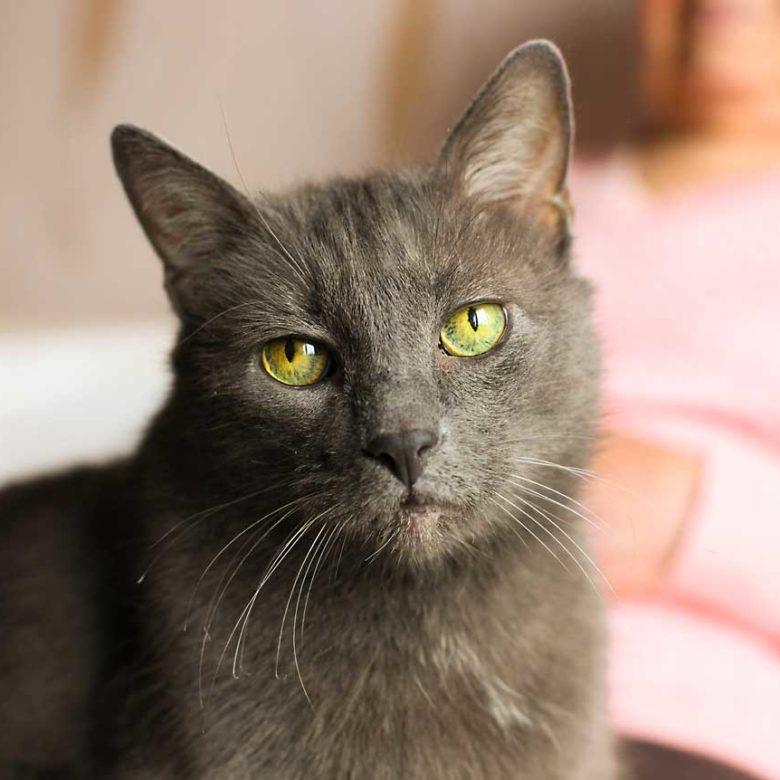 senior kitty euthanasia
