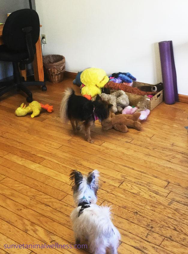 asheville vet animal individuality
